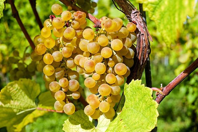 Skleněná láhev je součástí kvality vína